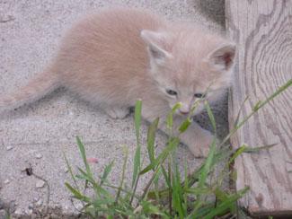 Sandycat