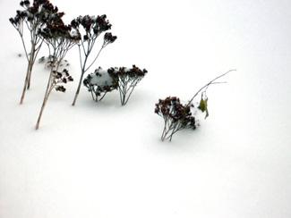 Snowytips1