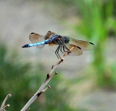 Dragonfly3 copy